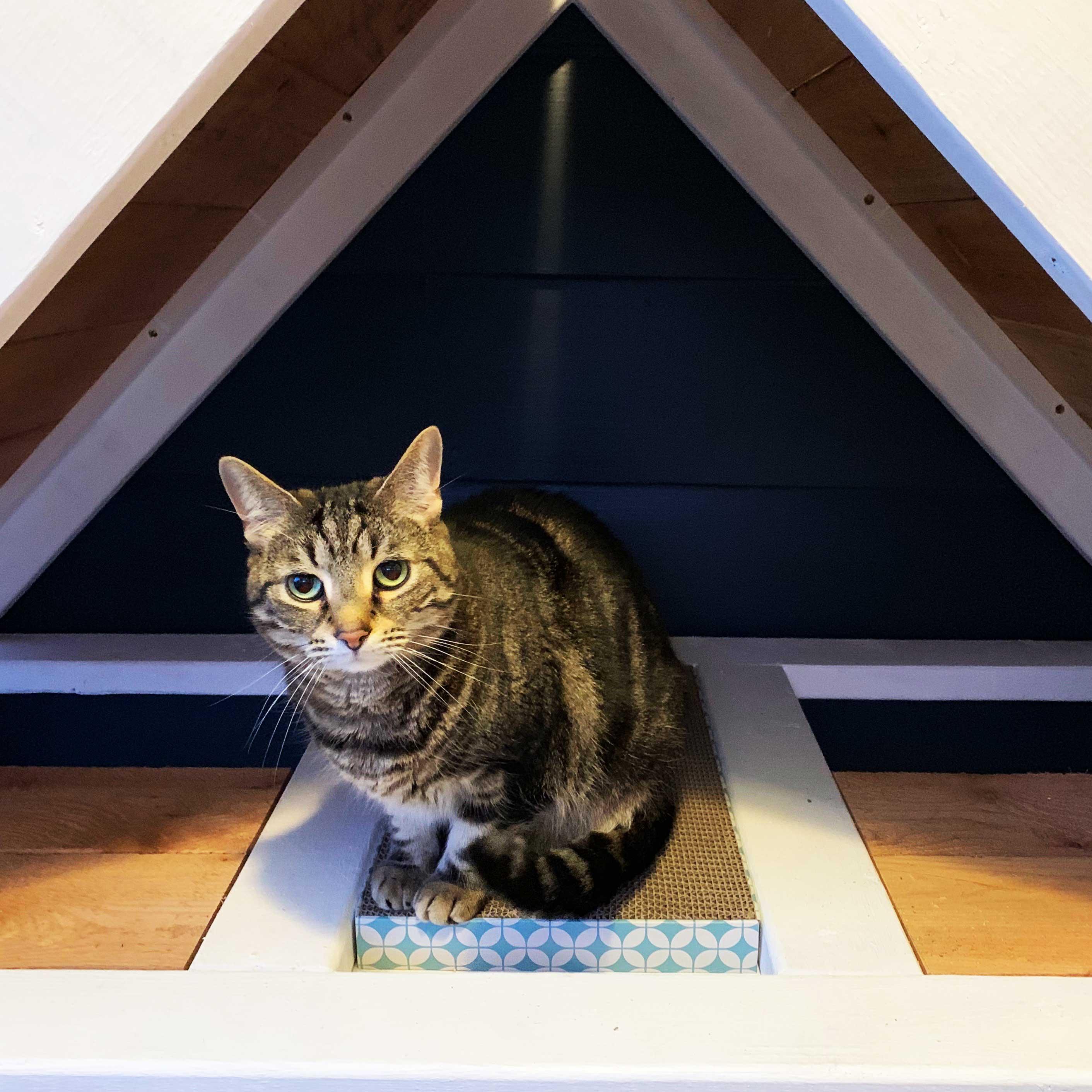 Ultimate DIY Cat Condo